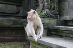 Monkey sitting on stone steps Royalty Free Stock Photo