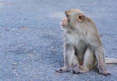 monkey sitting on street Royalty Free Stock Photography