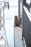 Monkey sitting on the top cable car station of Gibraltar Royalty Free Stock Photos