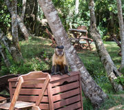 Monkey sitting on top of a wooden box Stock Photos