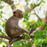 Monkey sitting royalty free stock image