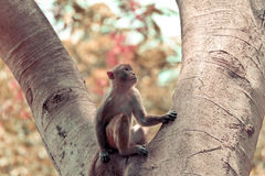 Monkey sitting tree Royalty Free Stock Images