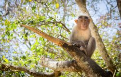 Monkey sitting on a tree stock photography