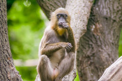 Monkey sitting on a tree. In a zoo garden royalty free stock image