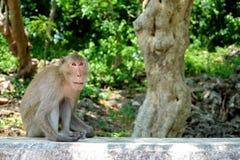 Monkey sitting on the wall at Khao Luang Cave, Phetchaburi Thailand. Stock Photo