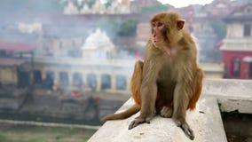 Monkey sitting on wall Stock Image