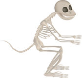 Monkey skeleton Royalty Free Stock Images