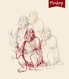 Monkey sketch engraving. Poster of monkeys. Vector illustration. Hand drawn sketch of young orangutan smile, monkey is sitting on its and finger is pointing back royalty free illustration