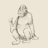 Monkey sketch engraving. Monkey. Vector illustration. Hand drawn sketch of young orangutan smile, monkey is sitting on its ass and finger is pointing back Royalty Free Stock Image