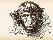 Monkey sketch Royalty Free Stock Image