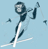 Monkey skier on a winter background Stock Image