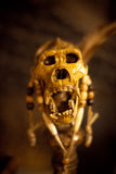 Monkey Skull. Shrunken Monkey Skull on a stick royalty free stock photo