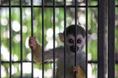Monkey. A small monkey in captivity stock photo