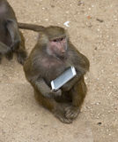 Monkey with a smartphone royalty free stock photos
