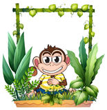 A monkey smiling Royalty Free Stock Photos