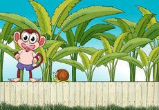 A monkey and a snail above the fence Stock Photo