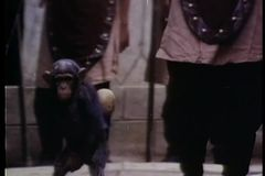 Monkey and soldier walking through a path of soldiers stock video