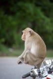 Monkey. Some monkeys sitting on a motorbike Stock Photography