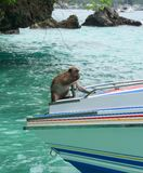 A monkey on the speedboat. At sunny day royalty free stock photos