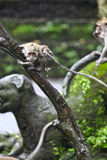 Monkey stand in the rain Royalty Free Stock Photos