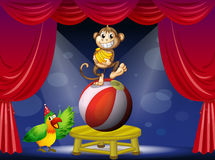 A monkey standing on a ball and a bird Stock Images