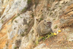Monkey standing on edge of crater on Kelimutu and eating fruit stock image