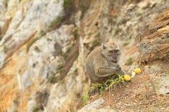 Monkey standing on edge of crater on Kelimutu and eating fruit stock image