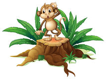 A monkey standing on the stump with leaves Stock Photo