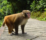 The Monkey is Staring at You Stock Photo