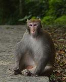 The Monkey is Staring at You. A monkey is sitting on the edge of the trail, staring at you Stock Image