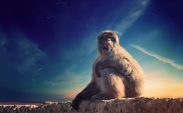 Monkey and stars Royalty Free Stock Photography