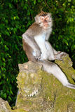 Monkey on a statue Royalty Free Stock Images