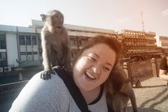 Monkey sticks on the shoulders of tourists and caresses the hair. stock images