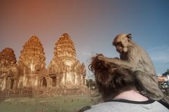 Monkey sticks on the shoulders of tourists and caresses the hair. royalty free stock photo