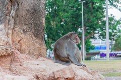 The monkey Stock Photo