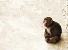 Monkeys. Monkey on a stone floor stock photos