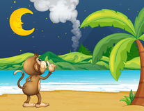 A monkey strolling in the beach Stock Photography
