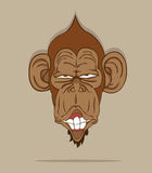 Monkey  Royalty Free Stock Photography