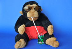 Monkey with sunglasses. Funny scene: fluffy monkey with sunglasses sipping drink Stock Photos