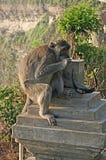 Monkey sunglasses Stock Photography