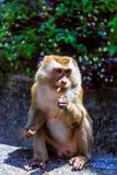 Monkey at sunny day at Monkey Hill Stock Photo