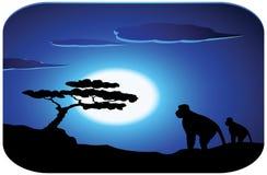 Monkey with sunrise Stock Image
