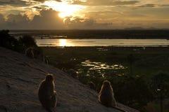 Monkey at sunset Royalty Free Stock Photo