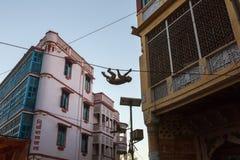 Monkey a suspensão em fios das ruas da cidade em Vrindavan fotografia de stock