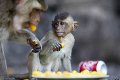 Monkey sweet Stock Photo