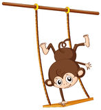 Monkey and swing Royalty Free Stock Images
