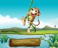 A monkey swinging. Illustration of a monkey swinging Stock Image