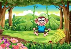 A monkey swinging Royalty Free Stock Images