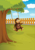 A monkey swinging on a tree Stock Photography