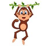 Monkey swinging on vines cartoon. Colourfull Stock Photos